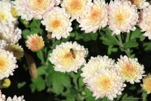 Albina si florile