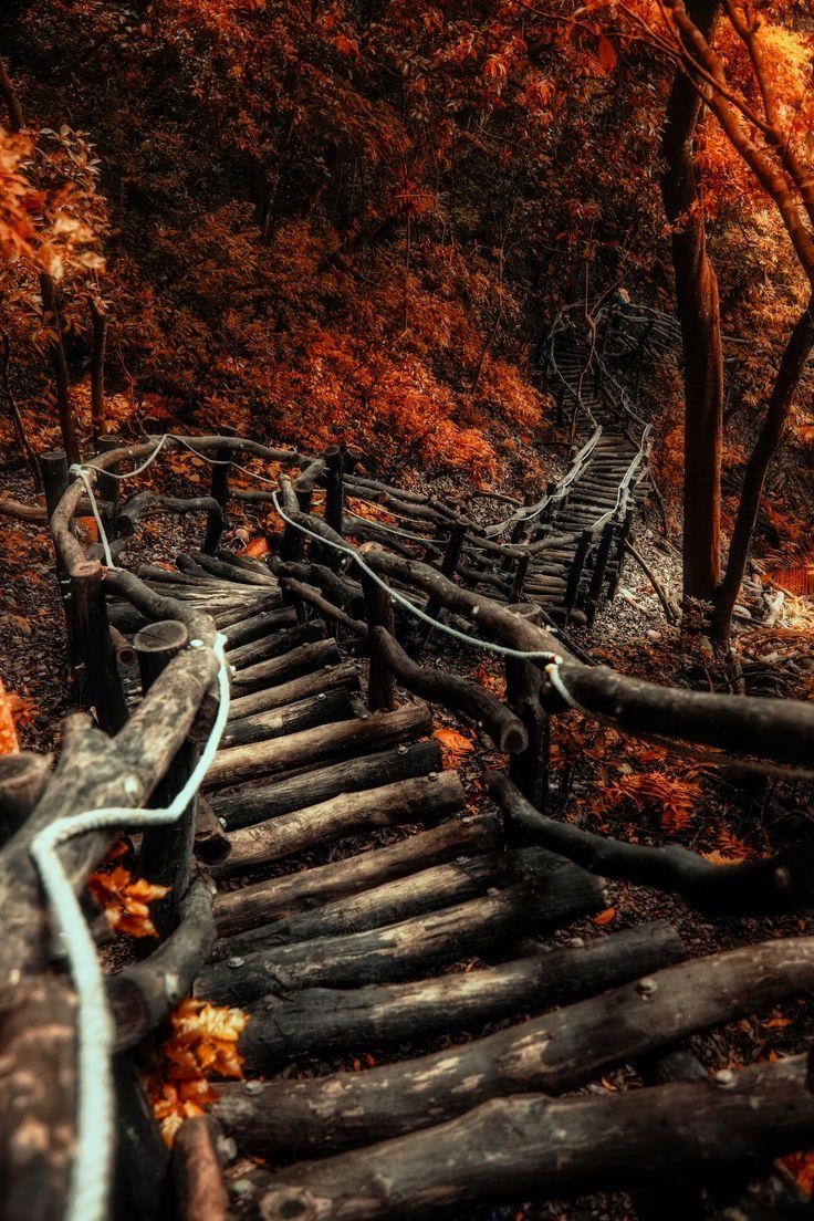 toamna pe scari