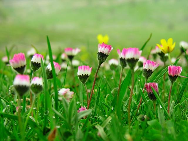 roua diminetii pe flori