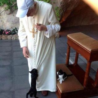 papa benedict si pisicile