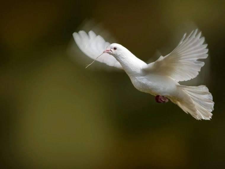 pace viata speranta