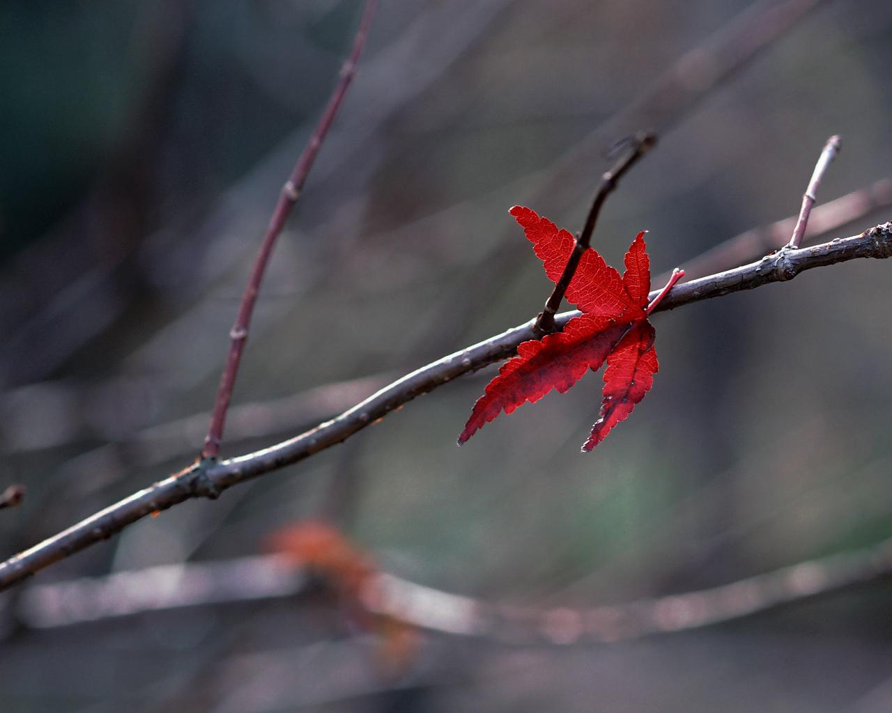 singuratate frunza toamna tacere liniste