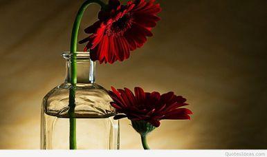 floare iertare