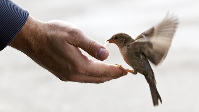 Gingasia celor mici_generozitate