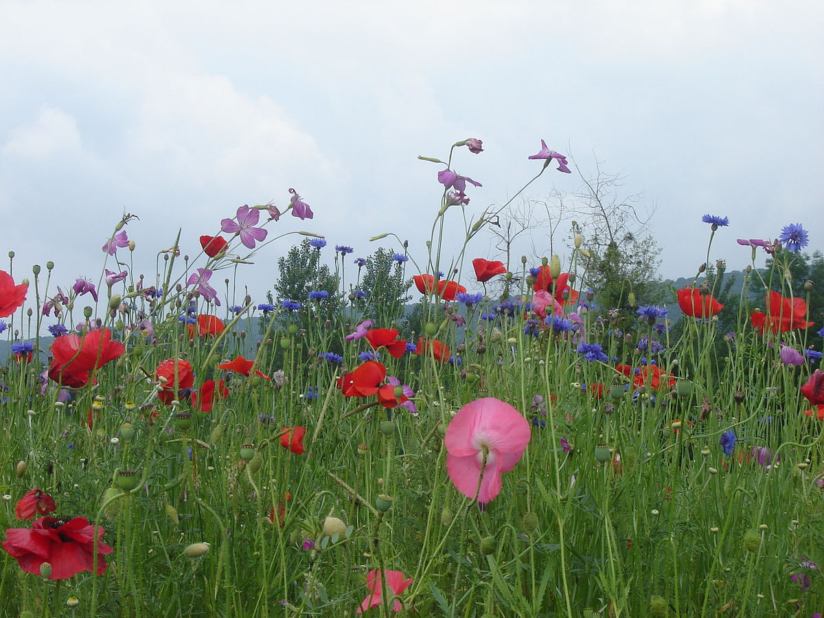 flori trecatoare ca viata