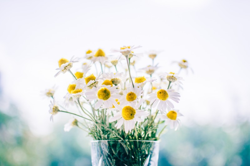 flori si virtuti